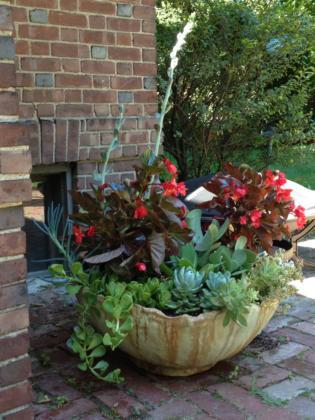 a large sphere container from john lamos with succulents and begonias; belmont 2012