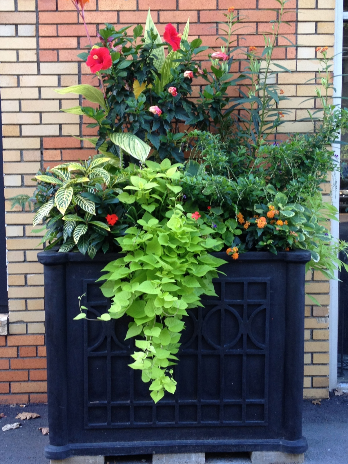 large soho planter with vibrant exotics, belmont 2012
