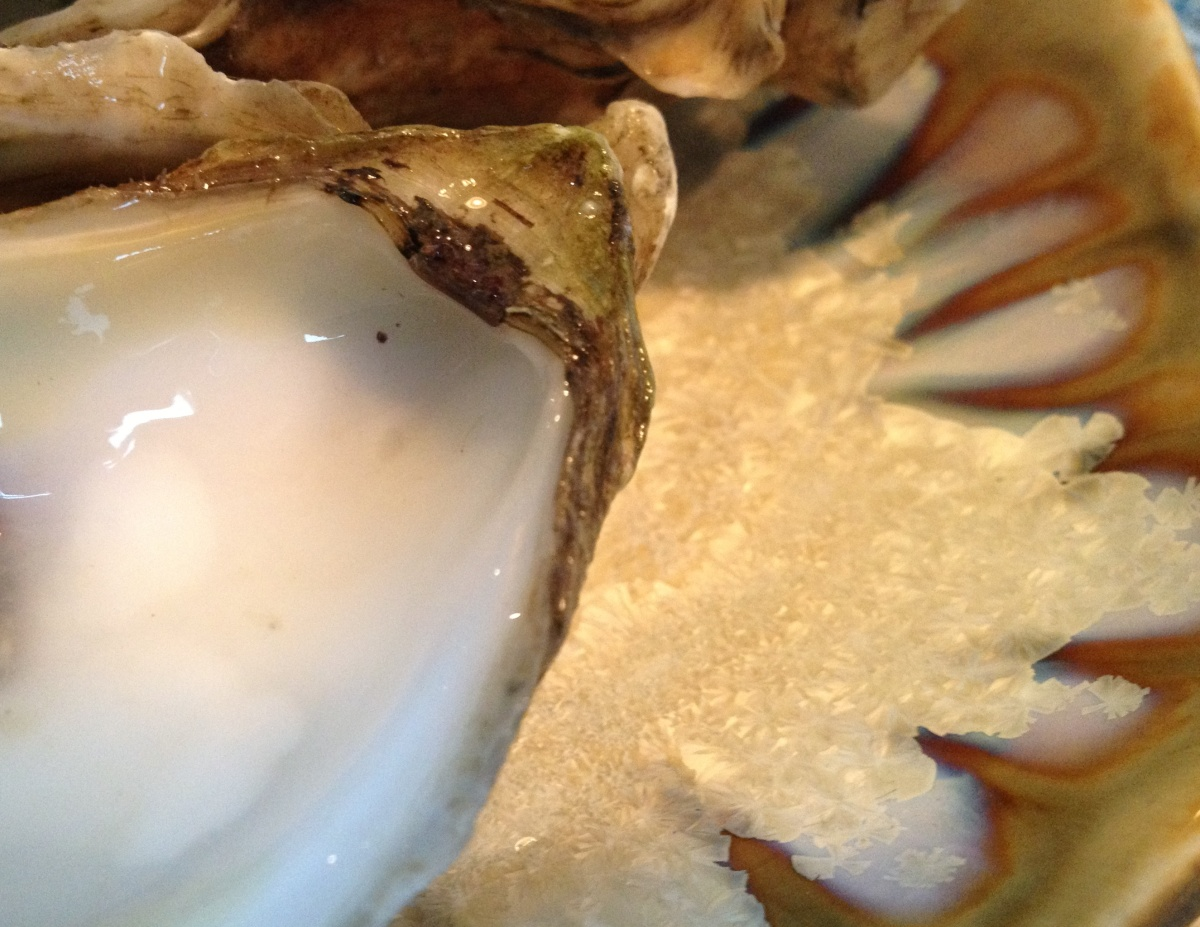 AE oyster on oyster plate 121013