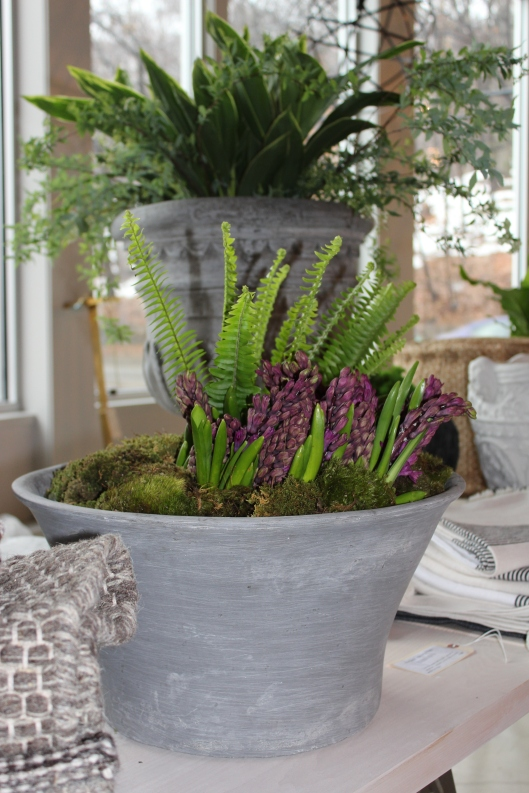 hyacinth - both the color + scent are pure spring - cut + arranged in a small modern bowl with mood moss + ferns...check out the wall hall urn in the background