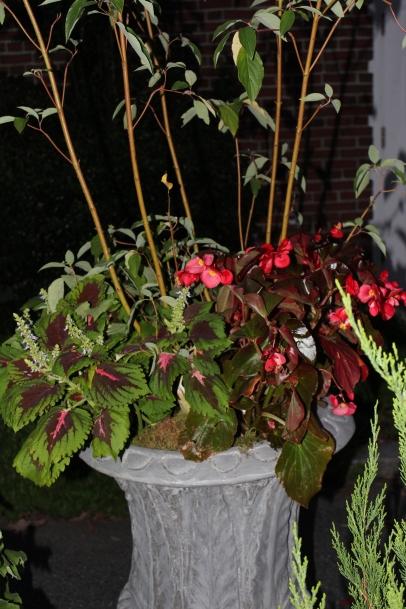 fern urn, late summer planting