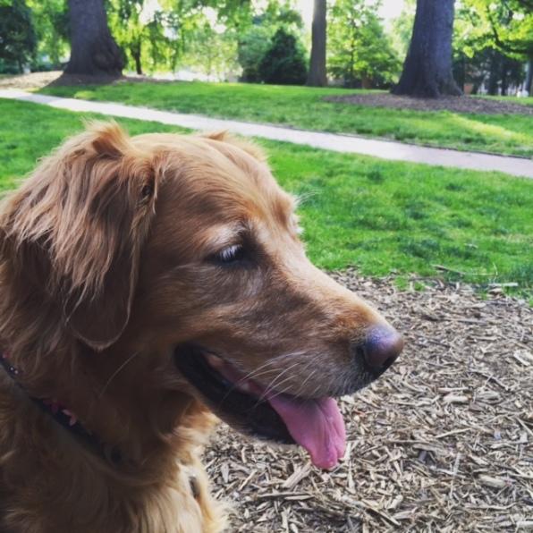 bailey-dog-verellen-2