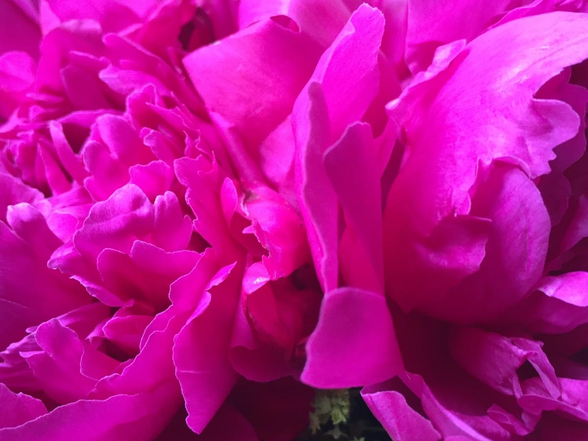 floral-peony-graduation-artefacthome-2