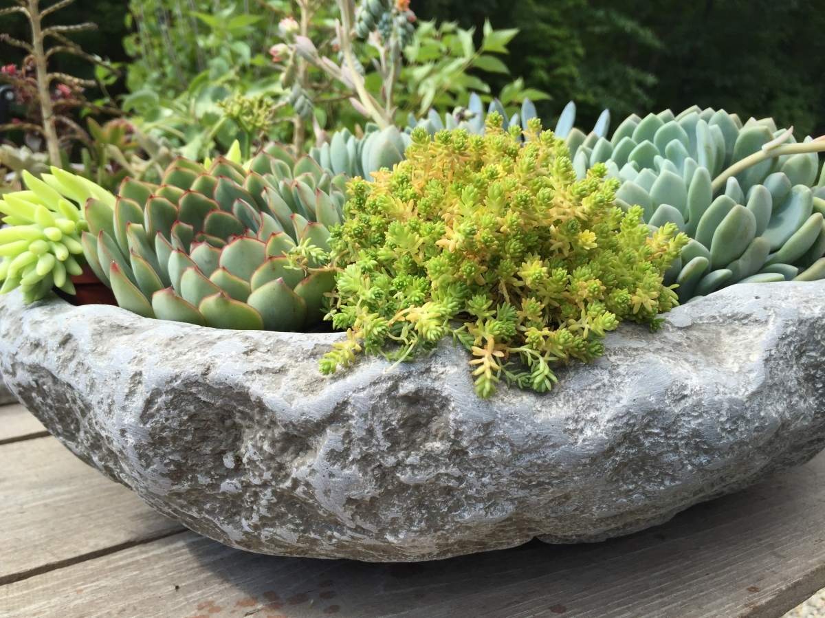 alpine-bowl-succulents-frosty-bright