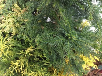 evergreen-mix-front-entrance-winter-2016-marypf-2