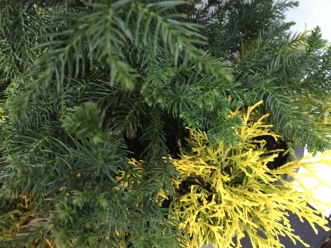 evergreen-mix-front-entrance-winter-2016-marypf-3
