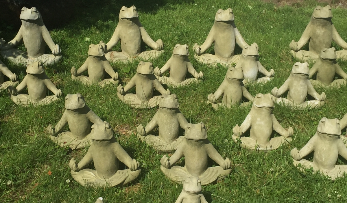 meditating frogs