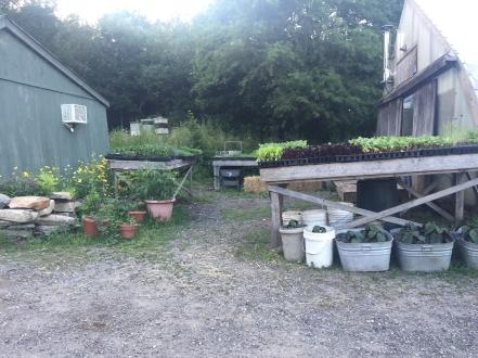 primo-greenhouse + greens
