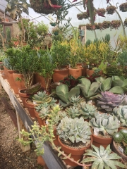 snug harbor succulent 13