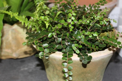 campo de fiori-button fern@artefacthome