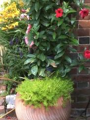 remolino planter-campo de fiori-@artefacthome client