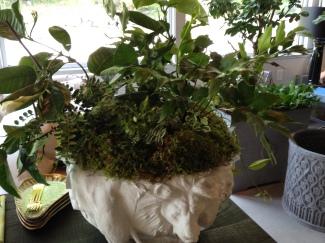 safari pot-limestone-pennoyer newman-fern planting@artefacthome