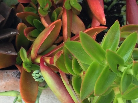 succulent detail-campo de fiori@artefacthome