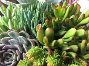 succulents-alpine bowl I-september 2017.2